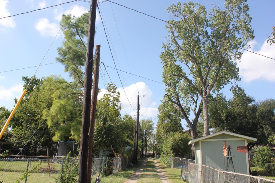 Trees Near Power Lines   Garland Power & Light
